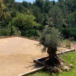 terrain de pétanque boules et olivier