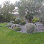 massif plantes et olivier