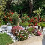 massif de fleu palmier et galets jardin manosque