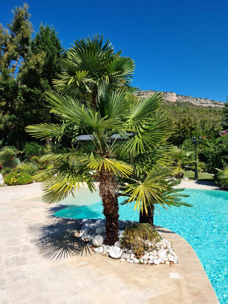 palmier jardin piscine manosque