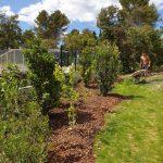plantation arbustes