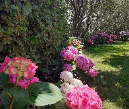 hortensias manosque