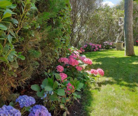 hortensia manosque