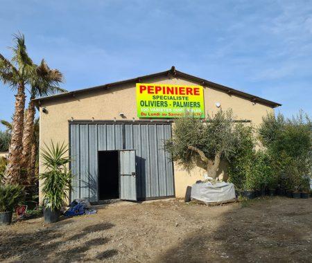 entrée pépinière villeneuve alpes de haute provence palmiers et oliviers